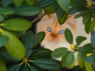 Собирать пазл The cat in the bushes онлайн