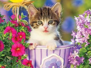 Собирать пазл Kitty онлайн