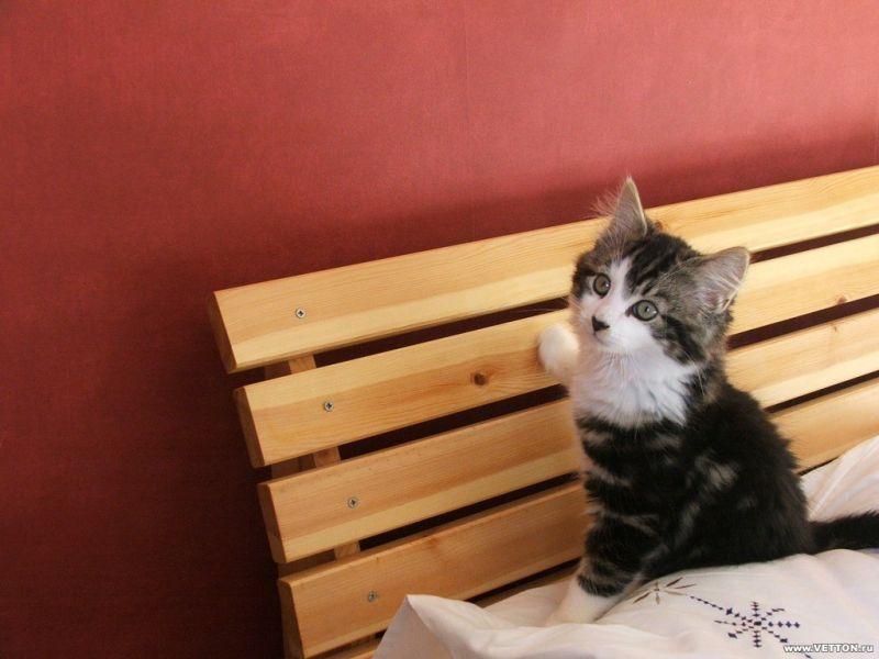Puzzle Sammeln Puzzle Online - kitten on a bench