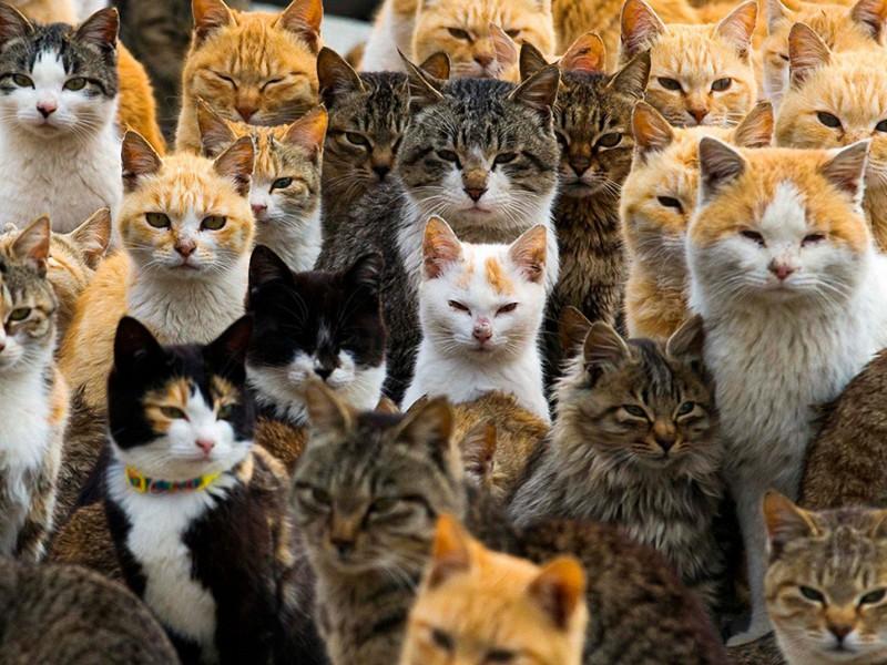 Puzzle Sammeln Puzzle Online - Cats