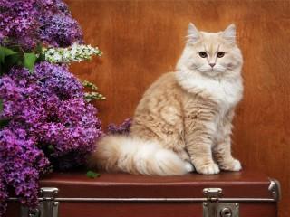 Собирать пазл Cat on a suitcase онлайн