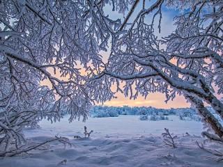 Собирать пазл Lace winter онлайн