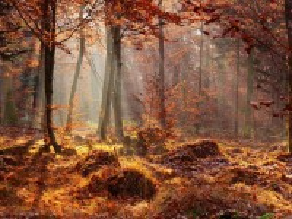 Собирать пазл Forest онлайн