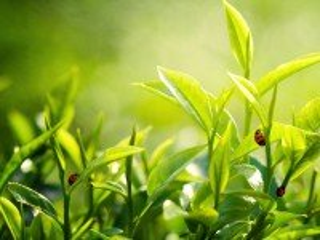 Собирать пазл Grass and insects онлайн