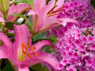 Собирать пазл Lilies and Phlox онлайн