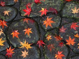 Собирать пазл Leaves on pavement онлайн