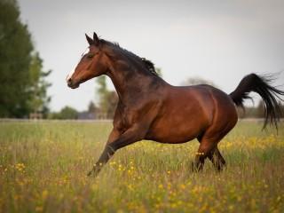 Собирать пазл Horse онлайн