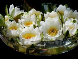 Собирать пазл Lotuses1 онлайн