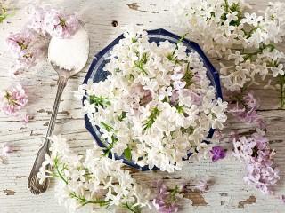 Собирать пазл Spoon and lilac онлайн