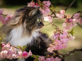 Собирать пазл Tomcat онлайн