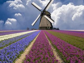 Собирать пазл Mill and fields онлайн