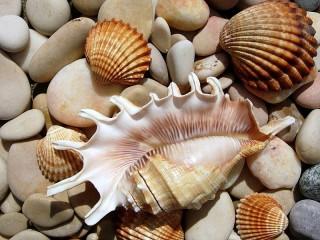 Собирать пазл Sea world онлайн