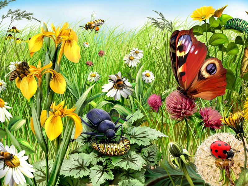 Puzzle Sammeln Puzzle Online - Insects and flowers