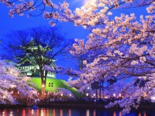 Собирать пазл Night Sakura онлайн