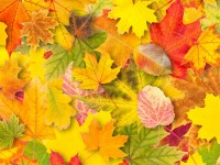 Собирать пазл Autumn leaves онлайн