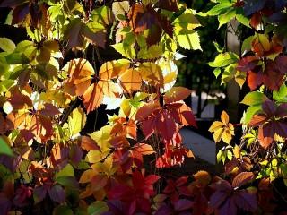Собирать пазл autumn lsite онлайн