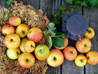 Собирать пазл Autumn apples онлайн