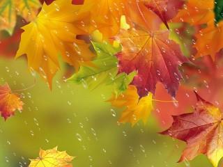 Собирать пазл Autumn rain онлайн