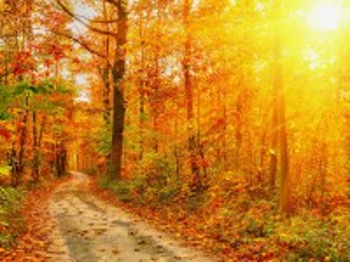Собирать пазл Autumn forest онлайн