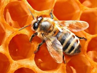 Собирать пазл Bee онлайн