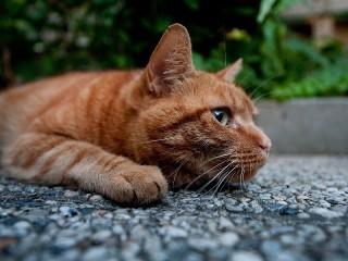 Собирать пазл Sad cat онлайн