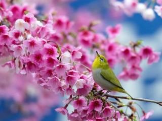 Собирать пазл Ptichka na vetke онлайн