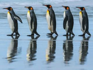 Собирать пазл Five penguins онлайн