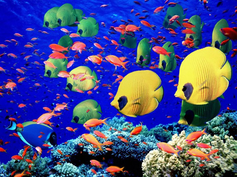 Puzzle Sammeln Puzzle Online - The fish on the reef
