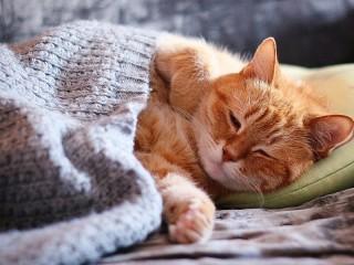 Собирать пазл Red cat онлайн