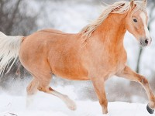 Собирать пазл Red horse онлайн