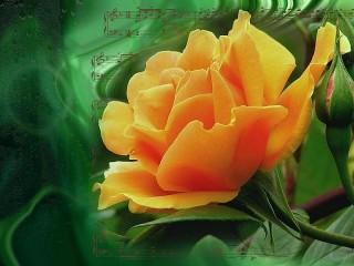 Собирать пазл Rose and sheet music онлайн