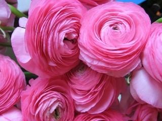 Собирать пазл Pink splendor онлайн