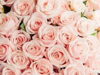 Собирать пазл Pink flowers онлайн