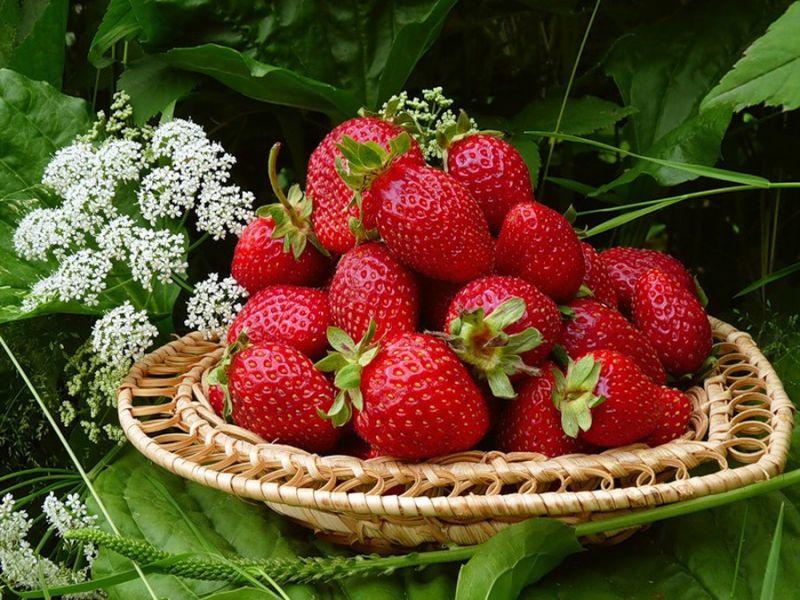 Puzzle Sammeln Puzzle Online - Garden strawberry