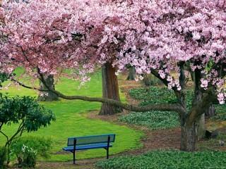 Собирать пазл Sakura онлайн