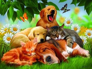 Собирать пазл Sweet dreams онлайн