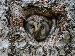 Собирать пазл Owl at home онлайн