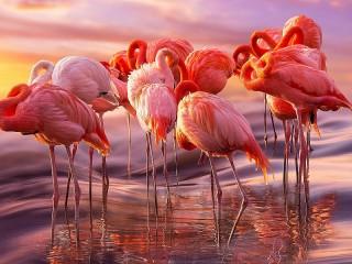 Собирать пазл A flock of flamingos онлайн