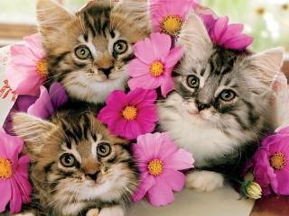 Собирать пазл Three kittens онлайн