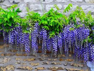 Собирать пазл Flowers on the wall онлайн