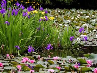 Собирать пазл Flowers on the water онлайн