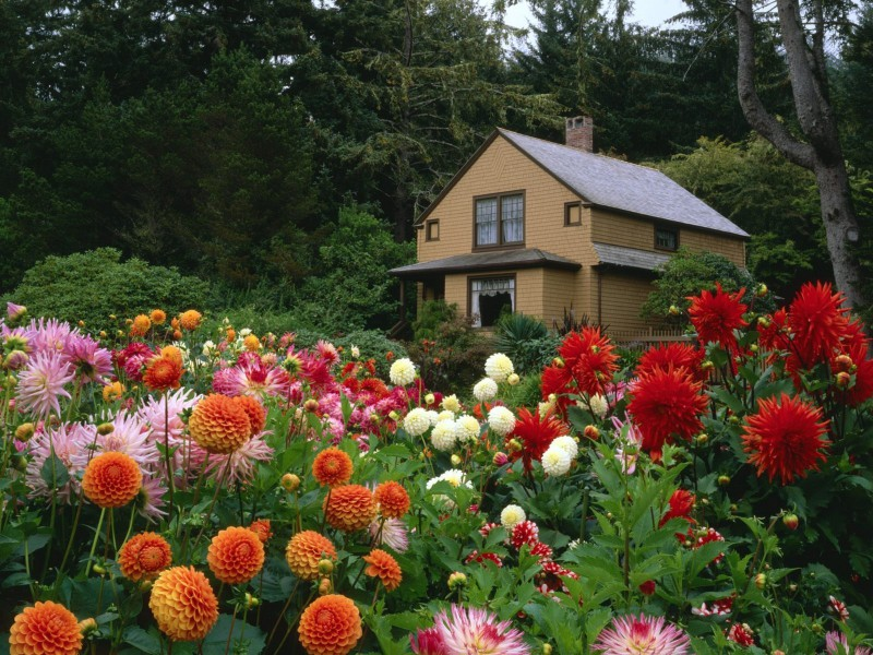 Puzzle Sammeln Puzzle Online - Flowers at house