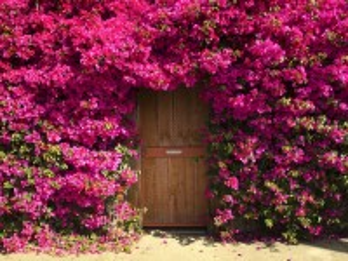 Собирать пазл Floral arch онлайн