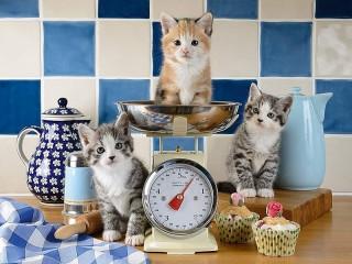 Собирать пазл Scales for kittens онлайн