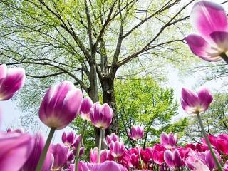 Собирать пазл It's spring. онлайн