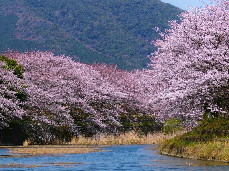 Puzzle Sammeln Puzzle Online - vesna v Yaponii