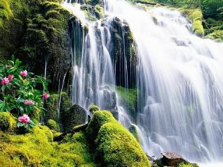 Собирать пазл Waterfall and flowers онлайн