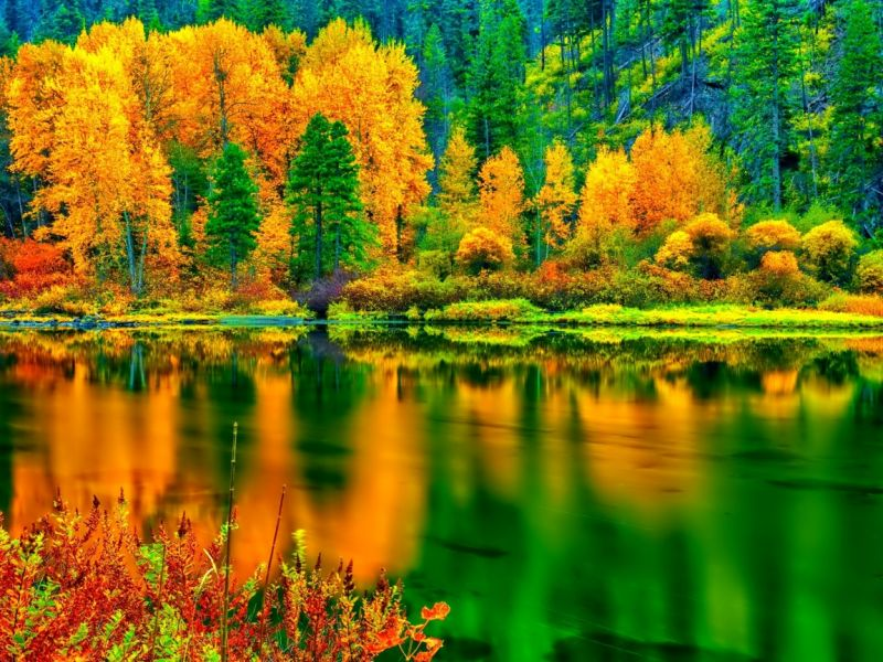 Puzzle Sammeln Puzzle Online - Let us remember an autumn