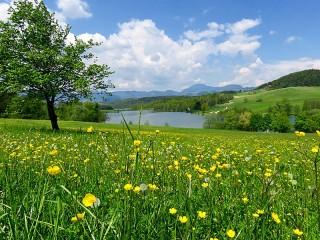 Собирать пазл Green spaces онлайн