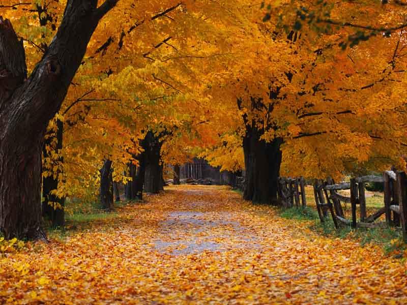 Puzzle Sammeln Puzzle Online - Golden autumn